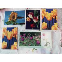 Цветы. Чистые открытки. Одним лотом.