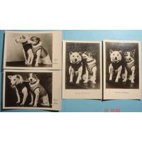 Комплект открыток СССР, ранний космос, Белка и Стрелка, малотиражные, Издание 24 и 31 августа 1960 года ГИМИЗ, оригинал