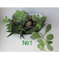 Набор кактусов и суккулентов(9шт.)-1