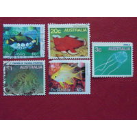 Австралия.  Морская фауна.