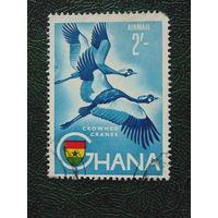 Гана.  Птицы.