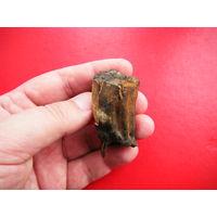 Окаменелый зуб доисторического животного.