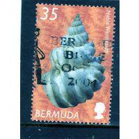 Бермуды. Ми-834.Благородныя эпитония (Sthenorhytis pernobilis). Серия: ракушки. 2008.