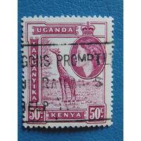 Кения Уганда Танганьика. Королева Елизавета II.  1954г.