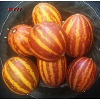 Семена вьетнамской дыни
