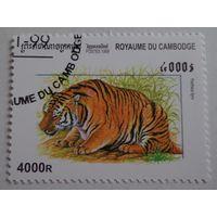 Камбоджа. 1999.тигр