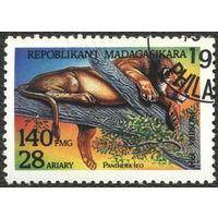 Кошки. Мадагаскар. 1994. Лев. марка из серии. Гаш.