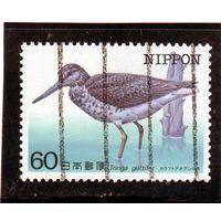 Япония.Ми-1582. Нордманн Гринсэнк (Tringa guttifera). Серия: Птицы, находящиеся под угрозой исчезновения.1984.