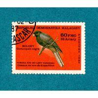 Мадагаскар-1987-Птицы