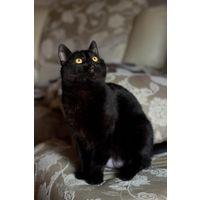 Черная кошка в дар