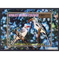 Фауна Птицы Африки Экваториальная Гвинея  1976 год 1 блок