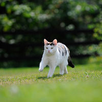 Кошка-путешественница, идеальный компаньон для прогулок в дар