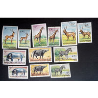 Бурунди 1964 г. Животные Африки, полная серия из 15 марок #0103-Ф1