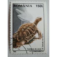 Марки. Румыния 1996. Черепаха