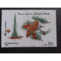Румыния 1996 шишки