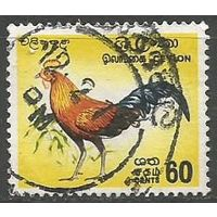 Цейлон. Джунглевая курица. 1966г. Mi#242.