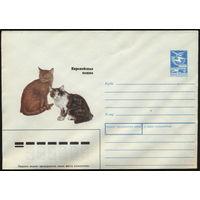 Кошки. ХМК чистый. СССР 1989. Европейская кошка