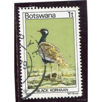 Ботсвана. Фауна. Дрофа