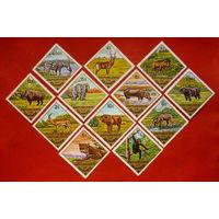 Гвинея. Фауна. Животные. ( 12 марок ) 1975 года.