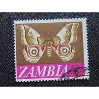 Замбия. Бабочка.