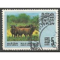 Цейлон. Азиатские буйволы. 1970г. Mi#395.