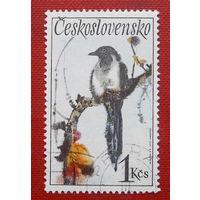 Чехословакия. Птица ( 1 марка ) 1972 года.