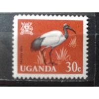Уганда Стандарт, птица**