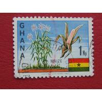 Гана. Кукуруза.