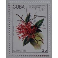 Куба.1993.цветок