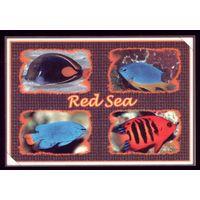 Египет Красное море Рыбки