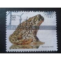 США 1996 жаба