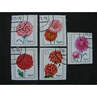 ГДР 1975 Цветы
