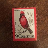 Уругвай. Фауна. Птицы. Churrinche.