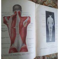Книга Атлас анатомии человека. 1938 г., МедГиз, Том 2. Учение о мышцах. 252 стр., иллюстрации.