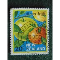Новая Зеландия. Флора.