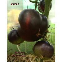 Семена томата Black Beauty (Черная Красавица)