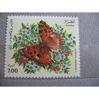 Алжир. Бабочка. 1991г.  к.ц. - 3 евро.