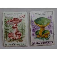 Румыния.1986.грибы