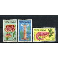 Марокко - 1965 - Морская фауна - [Mi. 553-555] - полная серия - 3 марки. MNH.