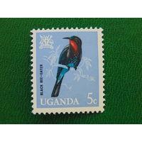 Уганда. Птицы.