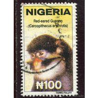 Нигерия. Обезьянка (концовка серии)