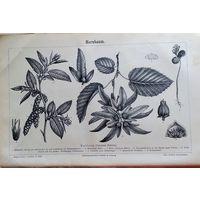 Гравюра энциклопедическая 19в. Hornbaum.  24x16 cm.