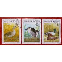 Венгрия. Птицы. ( 3 марки ) 1980 года.