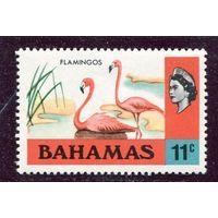 Багамы. Фауна. Фламинго