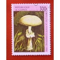 Гвинея. Грибы. ( 1 марка ) 1996 года.