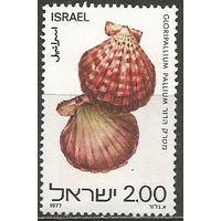 Израиль. Ракушки Красного моря. 1977г. Mi#726.