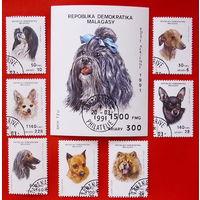 Мадагаскар. Собаки. ( Блок и 7 марок ) 1991 года.
