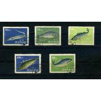 Корея 1962г. рыбы, 5м.