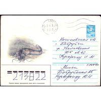 1985 год ХМК А.Исаков Сом 85-585