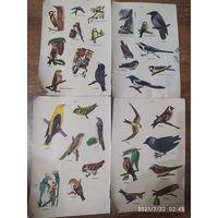 Наклейки птицы 4 листа